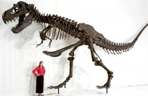 Dinosaur Boner