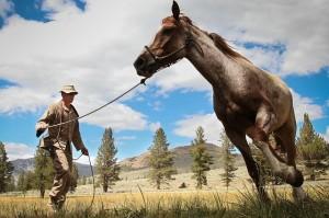 World Horse Day