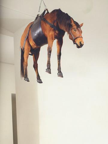 Horsedrop